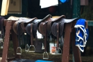2o6a1370 Saddles ready for use